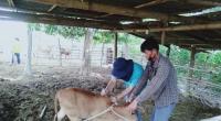 ปศอ ด่านช้างลงพื้นที่สร้างความรับรู้ความเข้าใจแก่เกษตรกรเกี่ยวกับโรคลัมปี สกิน